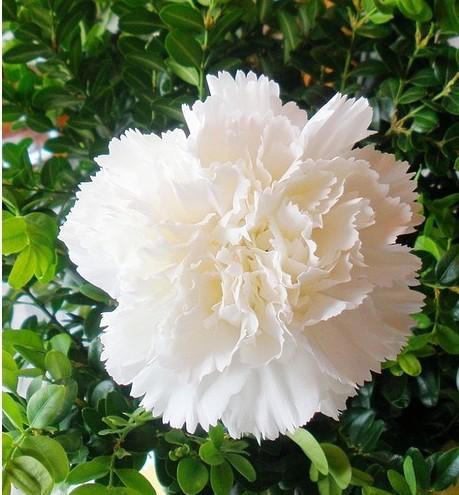 biệt thự hoa cẩm chướng tại gamuda gardens